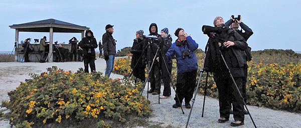 Exkursion till Falsterbo 13 oktober 2019. Foto Totta Sandberg
