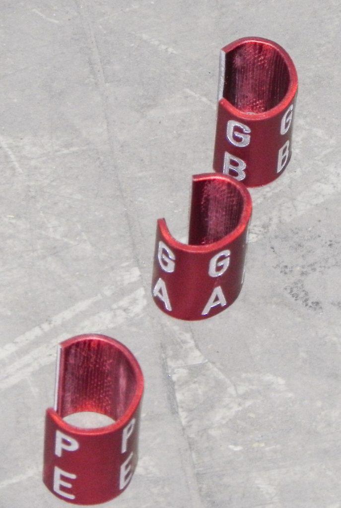 """2014 - De röda ringarna för vänster ben i """"verkligheten"""". (foto: Christer Strid)."""