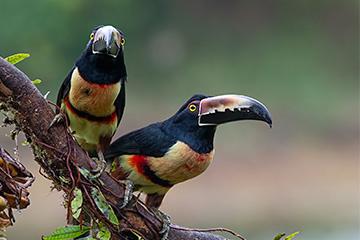 Costa Rica. Foto Håkan Johansson