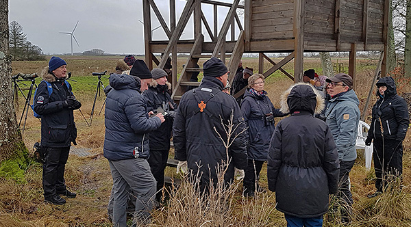 KOFs lusseskådning 2019, foto Totta Sandberg