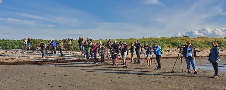 Måndagsexkursion till Sandön, 3 augusti 2020. Foto Totta Sandberg