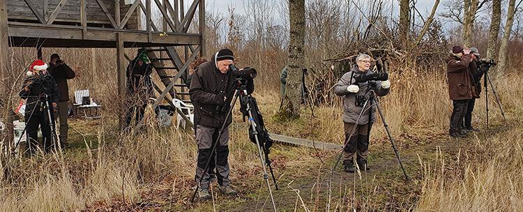 Lusseskådning vid Stureholm, foto Totta Sandberg