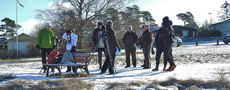 Vinterfågelrunda 2021, foto Karl-Erik Söderqvist