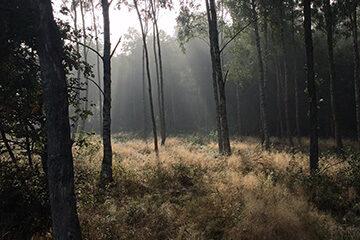 Tursköpskogen, foto Thomas Terne