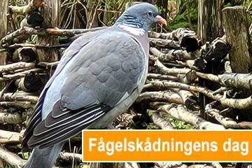 Fågelskådningens dag. Foto Micke Jönsson