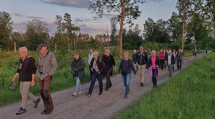 Nattskärreexkursion till Klören, foto Tommi Sandberg