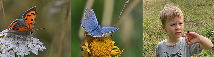 Fjärilar i Sinarpsdalen, foto Carina Eliasson