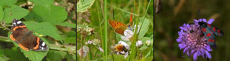 Fjärilar i Sinarpsdalen, foto Marjan Huiskes och Bengt Hertzman